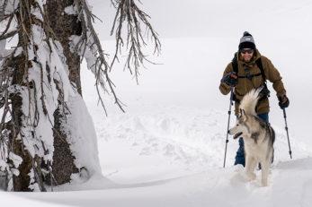 Loki the Wolfdog Snowshoeing Lake Tahoe