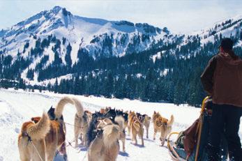 dog sled feature image