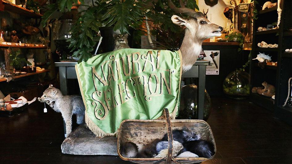 Natural Selection Shopping in Midtown Reno