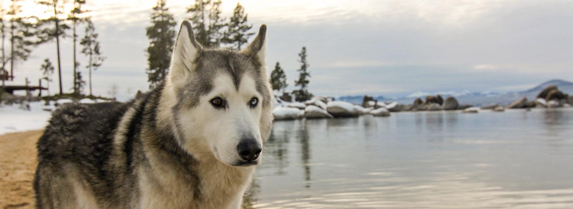 loki tahoe