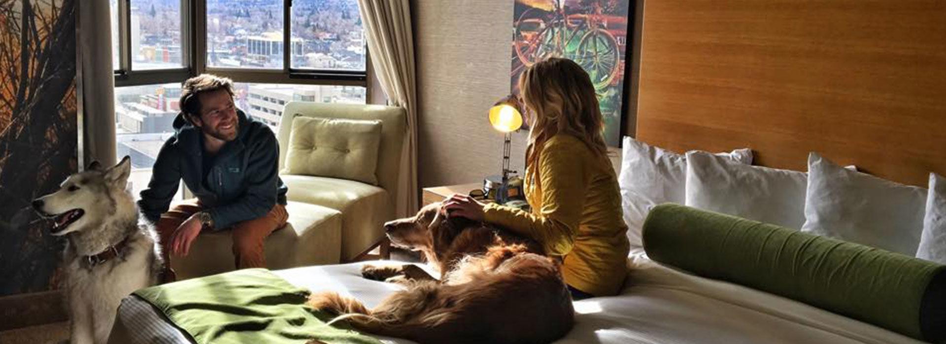 Pet Friendly Hotels in Reno, Pet Friendly Hotels Lake Tahoe