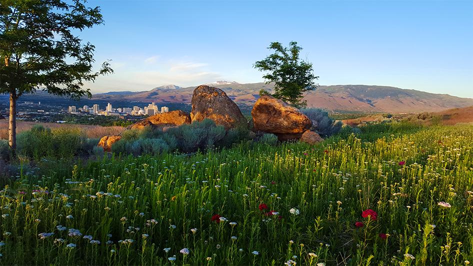 Spring Skyline Reno