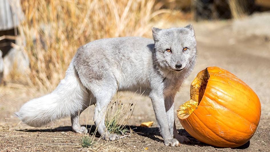 halloween activities for families in reno tahoe visitrenotahoe com
