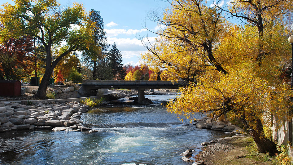 Fall Leaves Truckee River Reno