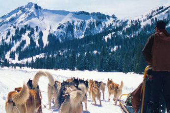 Dog Sledding Lake Tahoe