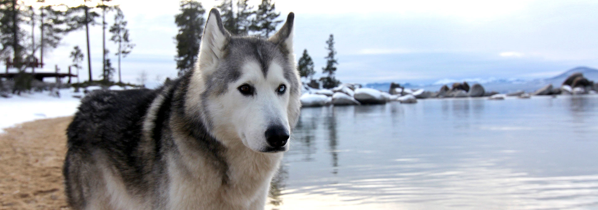Loki Sand Harbor Lake Tahoe