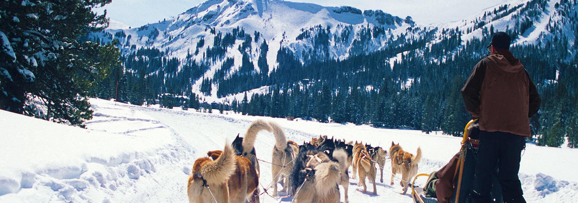Dog Sledding Tours Reno Tahoe